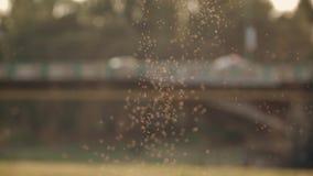 Ein Schwarm von Moskitos auf dem Hintergrund einer Transportbrücke stock video footage