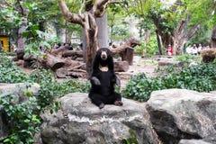 Ein schwarzer Bär stockfoto