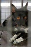Ein schwarzer Hund Stockfotos