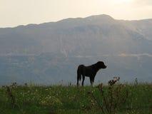 Ein schwarzer Hund an einem grünen Feld Lizenzfreie Stockfotos