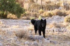 Ein schwarzer Schutzhund im Bauernhof in der Insel von Patmos, Griechenland Stockfotos