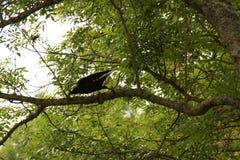 Ein schwarzer Vogel auf einer Niederlassung an der Spitze eines Baums Stockfotos