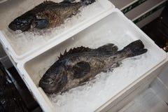 Ein Schwarzes farbiger Fisch innerhalb eines Kastens Lizenzfreie Stockbilder