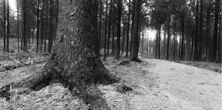 Ein Schwarzweiss-Bild eines Waldes stockfotos