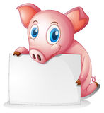 Ein Schwein, das einen leeren Signage hält Lizenzfreies Stockfoto