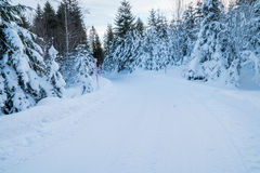 Ein Schweizer Wald bedeckt im Schnee lizenzfreie stockbilder