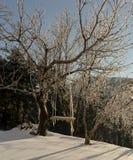 Ein Schwingen im Wald an einem Winterabend Lizenzfreie Stockbilder