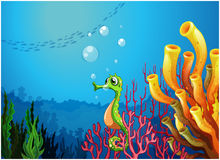 Ein Seahorse nahe den Korallenriffen Lizenzfreie Stockfotografie