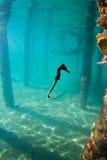 Ein Seahorse unter einem Kai in Honduras Stockfotografie
