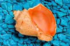 Ein Seashell auf den blauen Felsen getrennt auf Weiß Stockfotos