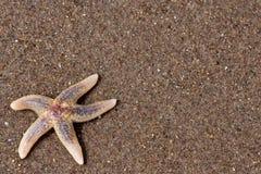 Seastar am Strand Lizenzfreie Stockbilder