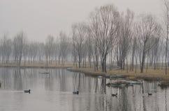 Ein See am nebelhaften Morgen stockfotografie