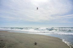 Ein Seemöwenfliegen über dem Sand Stockbild