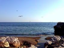 Ein Seemöwenstrand an einem heißen Sommertag Lizenzfreie Stockfotos