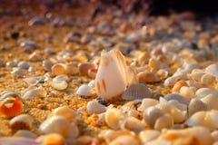 Ein Seeoberteil des Seeoberteils Stockbilder
