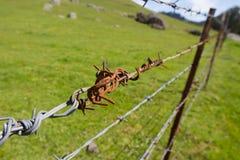 Eine Nahaufnahme eines verrosteten Abschnitts des Stacheldrahts vor einer grünen Weide Lizenzfreie Stockfotos