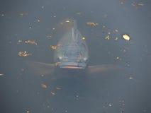 Ein sehr neugieriger Fisch! Stockfotos