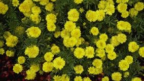 Ein sehr schöner Hintergrund von Blumen ist eine Art, von der horizontal von oben stock video footage