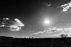 Ein sehr scharfer Sonnenstern im Himmel, mit einigen Pferden auf dem links a Lizenzfreies Stockbild