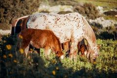 Ein Seitenporträt eines Fohlens und des Pferds auf einem grünen Gebiet lizenzfreie stockfotografie