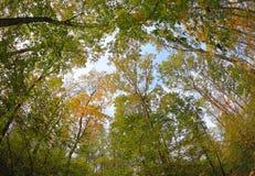 Ein Set Baumkronen im Herbst Stockbild