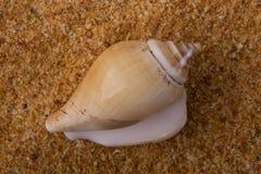 Ein Shell Stockbild
