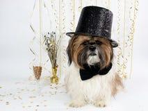 Ein Shih Tzu in einem Spitzenhut feiert Des Sylvesterabends Lizenzfreie Stockbilder