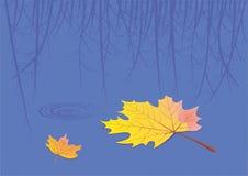 Ein sich hin- und herbewegendes Blatt ist in einem See Stockbild