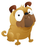 Ein Smirking Pug-Hund Lizenzfreie Stockfotografie
