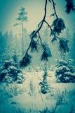 Ein sneefall im Wald Lizenzfreie Stockbilder