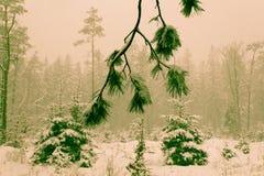 Ein sneefall im Wald Stockfotografie