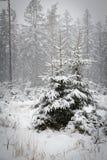Ein sneefall im Wald Lizenzfreie Stockfotos