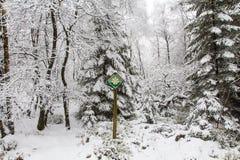 Ein sneefall im Wald Stockfoto