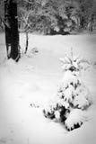 Ein sneefall im Wald Stockfotos