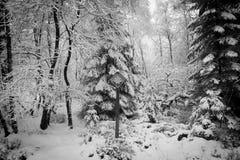 Ein sneefall im Wald Stockbild