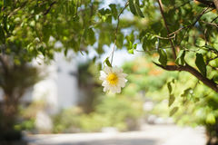 Ein Snuff Box-Blumen- und -unschärfehintergrund stockbilder