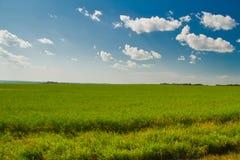 Ein Sommer-Feld mit blauen Himmeln stockbilder