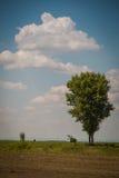 Ein Sommer gestaltet landschaftlich Lizenzfreie Stockfotos