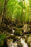 Ein Sommerwald in Berg Stara Planina, Bulgarien stockfotografie