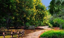 Ein Sommerweg im Park lizenzfreies stockbild