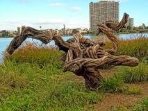 Ein sonderbarer Baum in Oakland, Kalifornien lizenzfreies stockbild