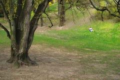 Ein Sonnenbad nehmen im Park Lizenzfreies Stockfoto