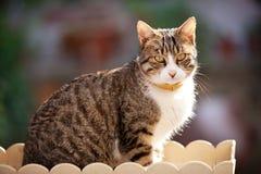 Ein Sonnenbad nehmende Katze lizenzfreie stockfotos