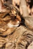 Ein Sonnenbad nehmende Katze Lizenzfreies Stockbild