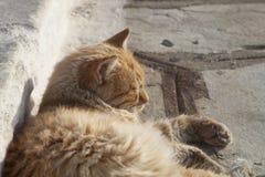 Ein Sonnenbad nehmende Katze Stockfoto
