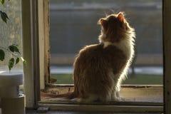 Ein Sonnenbad nehmende Katze auf altem Fenster Stockfotografie