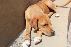 Ein Sonnenbad nehmender Hund stockfoto