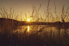 Ein Sonnenbad nehmender Wildflower im Sonnenuntergang stockfotografie