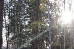 Ein Sonnenstrahl an einem bewölkten Tag macht das Leben heller Lizenzfreie Stockfotografie