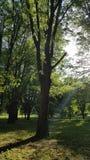 Ein Sonnenstrahl und ein Baum Stockfotografie